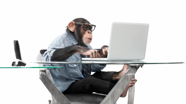 monkey-working